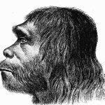 ricerca uomo Neanderthal