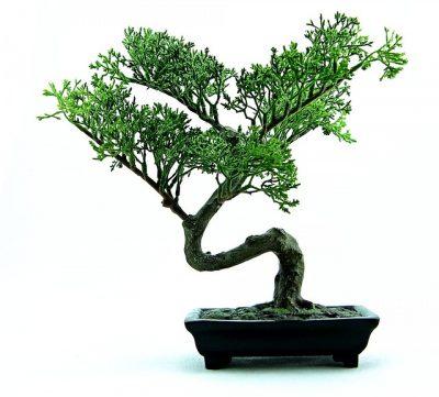 Università del bonsai