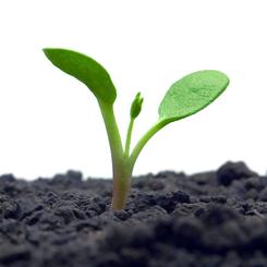 Borse di studio ministero agricoltura 2012