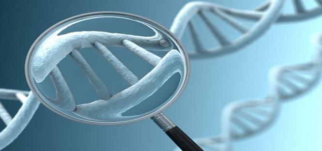 genoma leucemia progetto universita bologna
