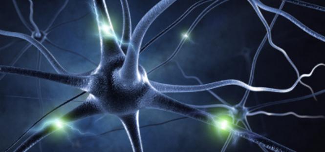 scoperto collegamento tra cervello e sistema linfatico