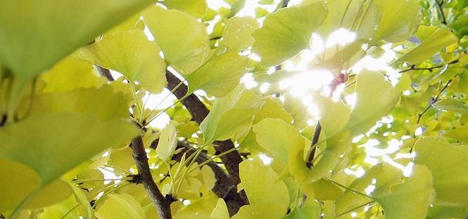 vivere nel verde aumenta benessere di corpo e mente