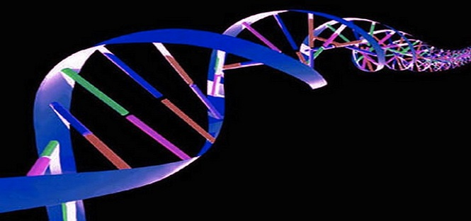 nuovi materiali da dna artificiale