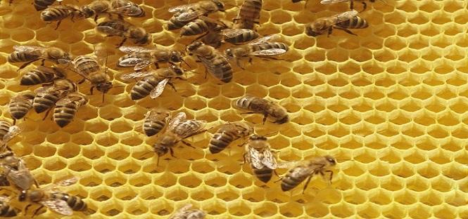 terra dei fuochi progetto per tutelare ambiente con le api
