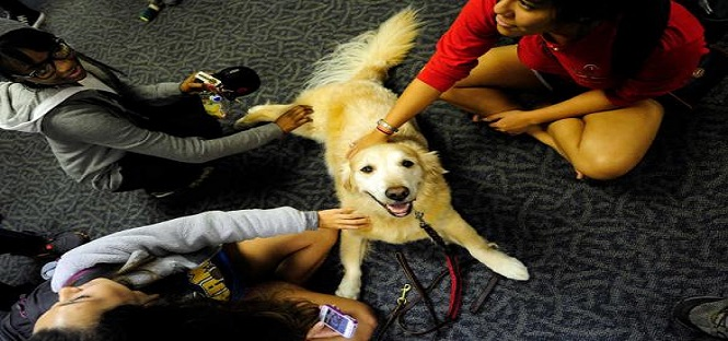 universita aberdeen pet therapy contro stress studenti